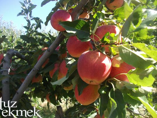 Elmalı- Böğürtlenli Tart