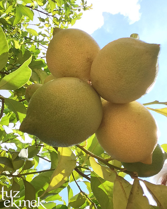 limon1-1