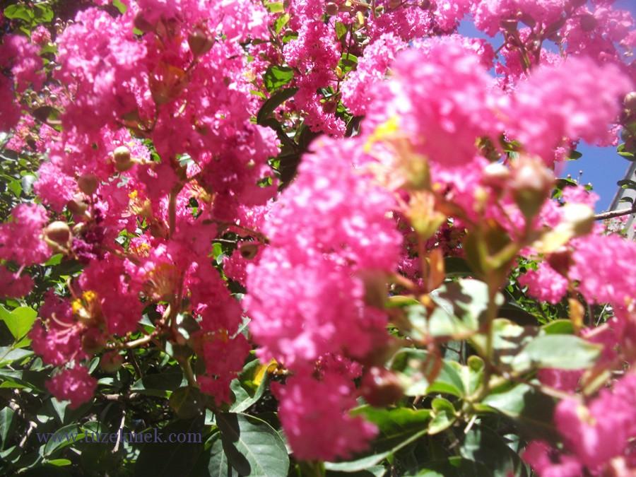 Etli Kabak, Kabak çiçeği, Kabak yaprağı dolması
